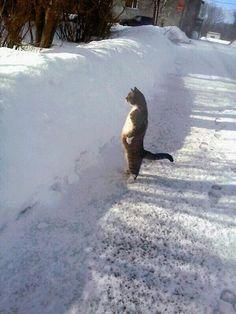 【画像あり】ネッコ「めっちゃ雪降ってるやんけ・・・」 : 暇人\(^o^)/速報 - ライブドアブログ
