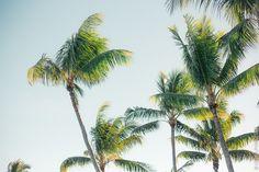 Sofitel Bora Bora Marara Beach Resort Olivia Poncelet Paradise Travel Sea Pastel Dream Palmtree