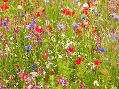 Image result for ideas for a meadow garden