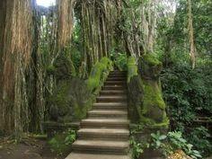 Monkey Forest,Ubud,Bali