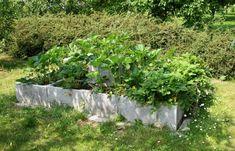 Záhon ze ztraceného bednění pro jahody Plants, Plant, Planets