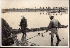 Rice Field by A. Davey, via Flickr ~ 1914