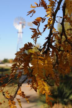 Windmill in fall at Mennonite Heritage and Agricultural Museum Goessel KS
