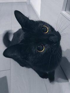 Black Fur Cat Tail Fur Animal Tail Fancy Dress #US