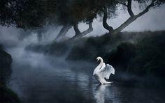 Nature Photography by Alex Saberi