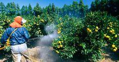 attention-a-ce-que-vous-mangez-voici-les-fruits-et-legumes-qui-contiennent-le-plus-de-pesticides