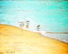 This vivid, colorful and lighthearted fine art photo of seabirds was taken in Wells, Maine. One of my favorite pastimes is to walk the beach listening the roar of the ocean and to watch seabirds dart in and out narrowly missing the waves. This beach scene captures that feeling. It is sure to add color and joy to your home décor. Wonderfully bold and modern décor, for your home or office!