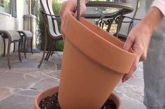 Ha neked is van a kertedben rózsa, ezt a trükköt jobb, ha elmented magadnak! Canning, Outdoor, Outdoors, Outdoor Games, Home Canning, The Great Outdoors, Conservation