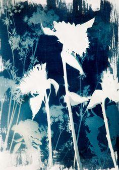 Cyanotypes #2 - Marcia Trieger - Fine Art Portfolio