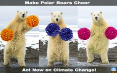 Make polar bears cheer. Act now on climate change!