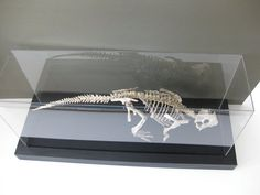 By Gwen from Barry Framing in San Antonio, TX, who recently used a stunning black moulding from Roma to accent a customer's dinosaur skeleton encased in a Plexiglas box. Using our moulding in a variety of ways, the creativity of our Roma customers is limitless.