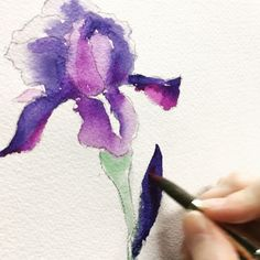 A speed-painting video of a watercolor iris flower.
