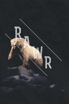 Bear bear bears