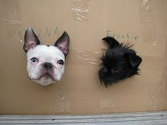 Una and Frankie, French Bulldog and a Brussels Griffon.