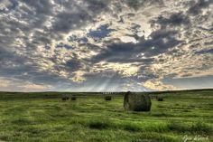 First Cut Hay Field. Saskatchewan landscapes by Ryan Wunsch.