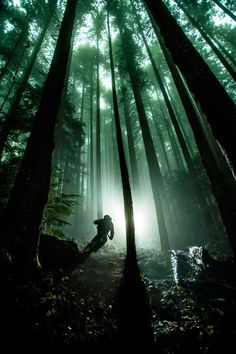 ale-ren: Brandon Semenuk riding in the wood via: http://bikesboulderingandbaking.tumblr.com/