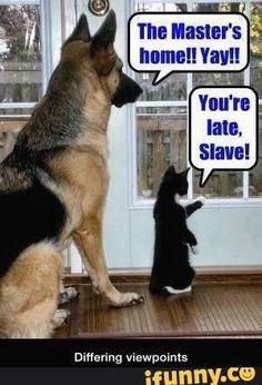 Teljesen olyan, mint nálunk a kutyus és a cica. És majdnem pontosan így várnak minket.