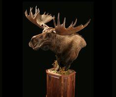 moose pedestal mount - Google Search