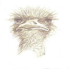 Emu Drawing by Margie Whittington