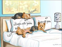 Sleeps with Yorkies