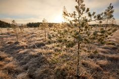 Trees in sunny frozen swamp in the autumn of Finland - Trees in sunny frozen swamp in the autumn of Finland Nordic Design, Nordic Style, Scandinavian Fashion, Who What Wear, Ny Times, Finland, Sunnies, Frozen, Royalty