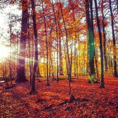 Another great #autumn pic by @hnindito #Osseghem park in #Brussels #visitbrussels and discover Heysel