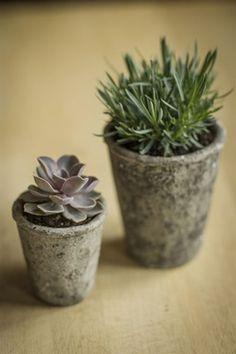 Concrete Cone Pots with Distressed Motif