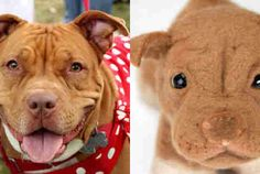 Yo dawg, we heard you really like your dog, so we took a picture of your dog and made an identical plush dog…dawg.