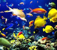 熱帯魚 画像 - Google 検索