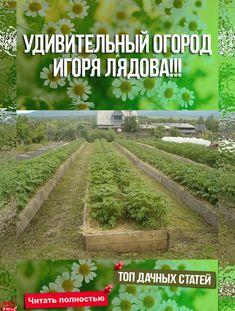 Home Vegetable Garden, Home And Garden, Harvest Day, Outdoor Plants, Gardening Tips, Homesteading, Garden Design, Vegetables, Flowers