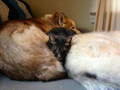 """""""deux chiens, c'est un lit king-size"""""""