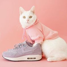 Air Max Sneakers, Sneakers Nike, Here Kitty Kitty, Cats Of Instagram, Nike Air Max, Street Wear, Streetwear Clothing, Zappa, Fresh Outfits