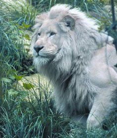 El rey!!