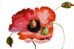 Image of 'Watercolor Poppy flower'