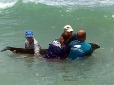 Sad ending for Fraser's dolphin that washed ashore