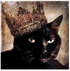 Black cats Rule!!
