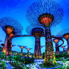 Supertrees Singapore | solar supertrees singapore supertrees in the garden by the bay
