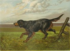 """Matted Antique Dog Print """"Gordon Setter"""" C. 1881 Vero Shaw's """"Cassell's Book of the Dog"""" Retriever, Hunting Dog, Gift for Dog Lover12x14"""""""