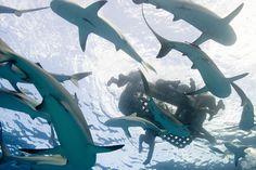 ANTI MATRIX: A aterradora história do USS Indianapolis: Bomba Atômica, torpedos e muitos tubarões