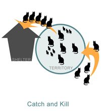 The Vacuum Effect: Why Catch and Kill Doesn't Work - Alley Cat Allies