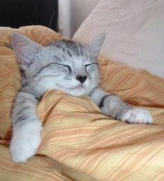 All tucked up and ready for bed…
