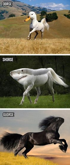 Funny - Silly horses - www.funny-pictures-blog.com