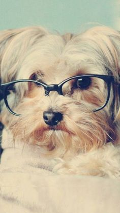 106 Best Animals In Glasses Images Cutest Animals Funny Animals