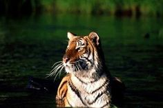 One-Day River Cruise & Stay Packages At Sunderbans   Hundred Coupons