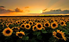 """""""Field of Suns"""" by Andreas Jones"""