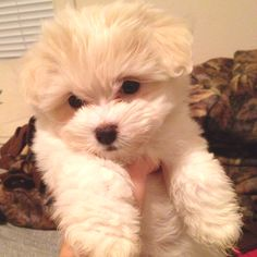 Lexi baby :) -omg!!! so adorable and my nickname is Lexi, so it was meant to be! :)