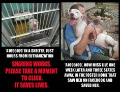 Sharing does save lives, thank you in advance !!! ♥