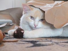 Indy Katze | Pawshake Gerasdorf bei wien