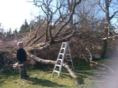 Brian's figuring what next to salvage from the fallen Oak.