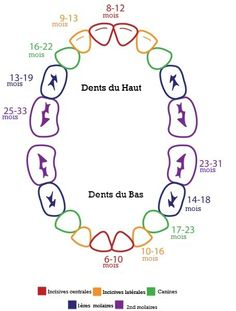 Teething Chart… Good to know. Teething Chart… Good to know. Baby Teething Schedule, Baby Teething Chart, Baby Teething Remedies, Baby Schedule, Teething At 4 Months, 6 Month Sleep Schedule, Natural Teething Remedies, Baby Health, Pregnancy Tips